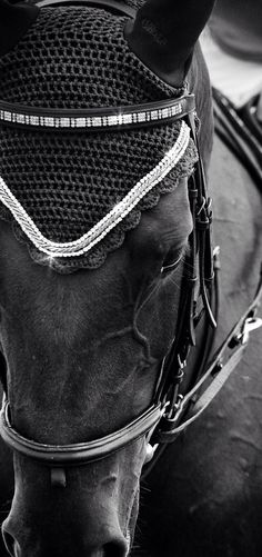 Gorgeous browband!