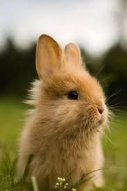 cute rabbit - Google zoeken