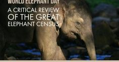 In the news – The True Green Alliance World Elephant Day, Wildlife, Africa, News, Wedding Ring