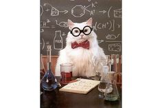 The Best of the Chemistry Cat Meme: Best of Chemistry Cat