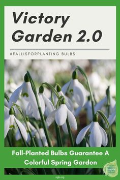 Planting Fall bulbs guarantee a colorful spring garden - #fallisforplanting bulbs - National Garden Bureau Amazing Gardens, Beautiful Gardens, Beautiful Flowers, Autumn Garden, Spring Garden, Planting Tulips, Spring Flowering Bulbs, Victory Garden, Garden Inspiration