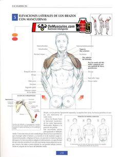 Elevación lateral con mancuerna. Ejercicios de hombros. Más información en www.ejercicios.demusculos.com