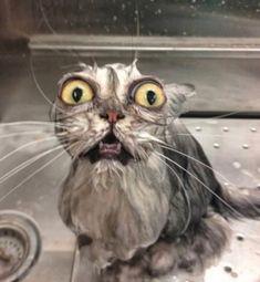 Diese 15 Bilder zeigen, dass klatsch nasse Tierchen einfach zum Schiessen sind
