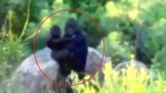 Top 15 Most Convincing Bigfoot Sightings Caught on Tape - Top 10 Things Bigfoot Video, Real Bigfoot, Finding Bigfoot, Bigfoot Sasquatch, Bigfoot Pictures, Pie Grande, Usa People, Unexplained Mysteries, Loch Ness Monster