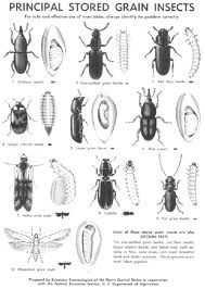 names and pictures of household pests! very helpful if you