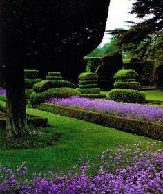 Lavender Garden, how lush is this? Lavender Cottage, Lavender Garden, Lavender Fields, Lavender Flowers, Formal Gardens, Outdoor Gardens, Topiary Garden, Topiaries, Beautiful Gardens