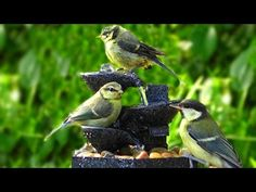 Relaxing Bird Song & Nature Sounds - 1 Hour of Little Birds at The Water. Tiny Bird, Nature Sounds, Little Birds, Kinds Of Music, Fountain, Wildlife, Relax, Creatures, Pets
