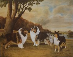 Collie limited edition lithograph Time of by PawprintsPortfolio, $44.95