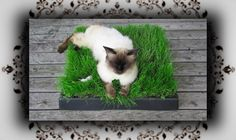 DIY ♔ Chill Out Zone aus Katzengras – Einfach zum Kotzen!