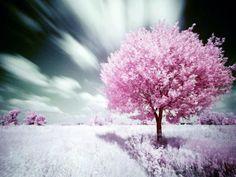 Il mezzo può essere paragonato a un seme, il fine a un albero; e tra mezzo e fine vi è esattamente lo stesso inviolabile nesso che c'è tra seme e albero.    (Gandhi)    Seguici su www.fanpage.it