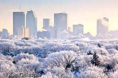 Winnipeg, Manitoba Canada - Winter day with hoar frost on the trees. Moving To Canada, Canada Travel, Beautiful World, Beautiful Places, Beautiful Gorgeous, National Geographic Travel, Western Canada, Winter Photos, Le Far West