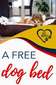 Learn what all goes into a good dog bed in order to combine comfort and value (and avoid probmls with smells or even sickness) and enter the context to win one for free Cute Dog Beds, Cute Dogs, Largest Great Dane, Personalized Dog Beds, Indestructable Dog Bed, Dog Rooms, Mistakes, Chihuahua, Your Pet