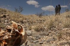 mexican border death - Google Search