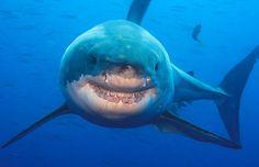 Happy #Shark