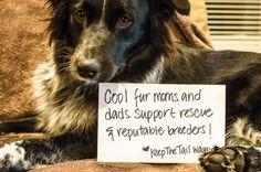 A Boycott   A Dog Lover's Response to Bridges Pets of Snohomish WA