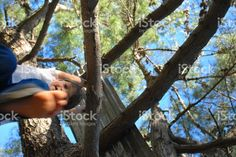 Boy hanging in a Tree royalty-free stock photo The World Race, Interracial Marriage, Kiwiana, Photo Tree, Fall Photos, Image Now, Looking Up, Royalty Free Stock Photos, Childhood