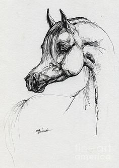 Horse Drawing - Arabian Horse Drawing 39 by Angel  Tarantella