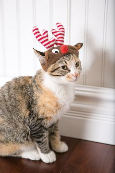 Inspire reindeer games! Sleigh not included with adorable reindeer antlers for cats and dogs from PetSmart. #givethanks