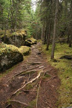 Ell és el camí, la veritat i la vida. Largest Countries, Countries Of The World, Great Places, Places To See, Canada, Parc National, Quebec City, Walkways, Banff