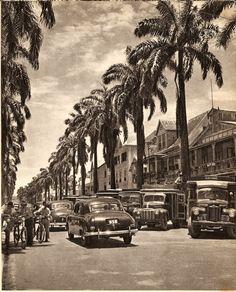 Maagdenstraat Jaren '50....zooo prachtig met die statige koningspalmen & die Vintage cars!