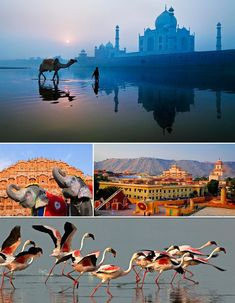 Golden Triangle with colors of Gujarat - India Tours – Golden Triangle Tours @ India Tourism Packages  http://toursfromdelhi.com/12-days-tour-of-golden-triangle-with-gujarat