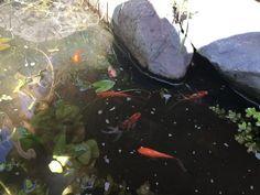 Super Fish Koi-Flow 30 Teichbelüfter