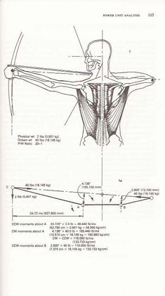 """Scanned from """"Archery anatomy"""" showing posture of shoulder being hunched down during pre-release stage."""