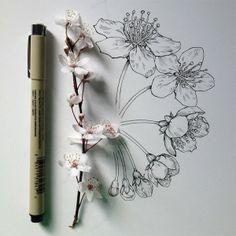 植物笔记。作者:Noel Badges Pugh 手绘 水彩 花卉 钢笔画 铅笔画
