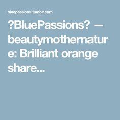 ⚓BluePassions⚓ — beautymothernature: Brilliant orange share...