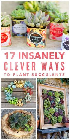 Succulents Succulents in containers Planting succulents Succulent garden diy Plants Succulents indoor 17 Insanely Clever Ways to Plant Succulents