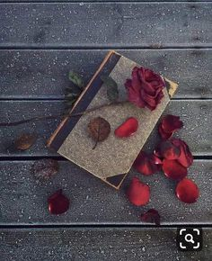 I will not disturb the memory. He fell asleep, let him be silent. But the heart believes in miracle, it hurts me. Flower Backgrounds, Wallpaper Backgrounds, Iphone Wallpaper, Crazy Backgrounds, Flower Wallpaper, Nature Wallpaper, Book Flowers, Flowers Dp, Beautiful Rose Flowers