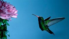 How to attract hummingbirds and butterflies to your garden | MNN - Mother Nature Network