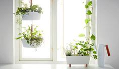 Afbeeldingsresultaat voor kruiden groeien met led in huis