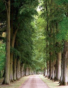 Column: Trees