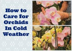 House plants orchid care tips on pinterest orchid care orchids and growing orchids - How to care for potted orchids ...