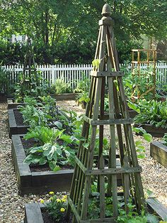 Raised beds inside a white picket fence -  the pyramid trellis is so pretty