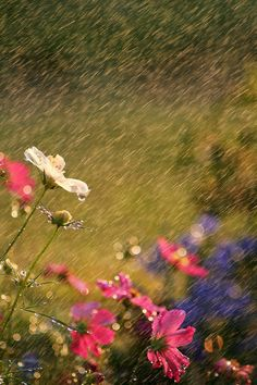 Things to do this - dance in the rain Photo by Darren Fisher 夏の雨 Sound Of Rain, Singing In The Rain, Rainy Night, Rainy Days, Gravure Photo, I Love Rain, Rain Dance, Rain Photo, Rain Go Away