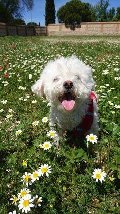 Dogs, Cute, Animals, Animales, Animaux, Pet Dogs, Kawaii, Doggies, Animal