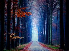 Tree Tunnel Drenthe, Netherlands   Spectacular Places