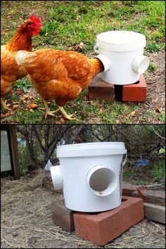 Keep your backyard and your chicken coop clean with this DIY mess-free bucket chicken feeder :)