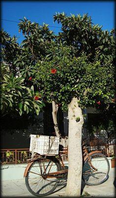 Beautiful image through the neighborhoods of #Ierapetra.    Όμορφη εικόνα μέσα από τις γειτονιές της Ιεράπετρας.     Photo Dimitris Aspiotis Crete Island, Places To Visit, Landscapes, Greek, Sidewalk, Europe, The Incredibles, Beautiful, Paisajes