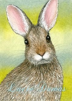 ACEO art print Hare 29 rabbit, bunny, painting by Lucie Dumas | ArtbyLucie - ACEO on ArtFire