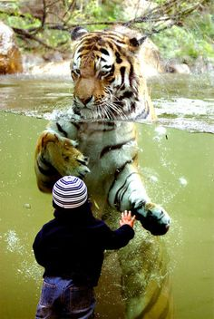 A tiger and a kid.