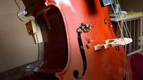 Bees set up hive in professor's cello - BBC News