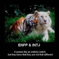 pin this and I am pinning it again. I am an ENFP and Grumpy is an INTJ ...