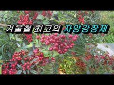 흰 백발이 검게 되고 노인들이 먹으면 몸이 튼튼해지고 젊어진다는 놀라운 신선초 - YouTube World, Youtube, Plants, Planters, Plant, Planting, Peace, The World