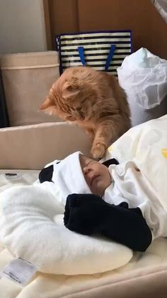 Funny Cute Cats, Cute Baby Cats, Cute Funny Babies, Cute Little Animals, Cute Funny Animals, Kittens Cutest, Cats And Kittens, Cute Dogs, Baby Pets