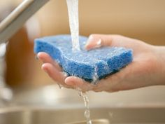 Is Your Kitchen Sponge Harboring MRSA?  Cold and flu season is coming. Want to get smart about germs? Learn how to duck the bugs and bacteria that can cause all kinds of ills.
