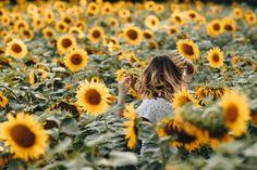 Mein absolutes Lieblingsbild vom letzen Sommer! Es ist auch in meinem YouTube Video zu finden <3 #sunflower #sunflowermood #sonnenblumen #sunflowers #sonnenblume #lieblingsblume