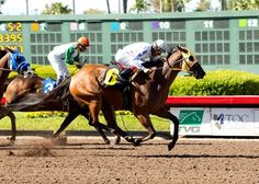Matson Racing's San Onofre held off Wild Dude in the stretch and won the $100,000 Los Angeles Stakes (gr. III) April 16, 2016 at Los Alamitos Race Course, giving jockey Edwin Maldonado a fourth successive win in the race.